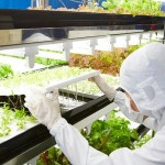 Toshiba cultiva con éxito sus primeros vegetales de laboratorio